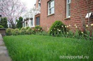 Трава у дома газон