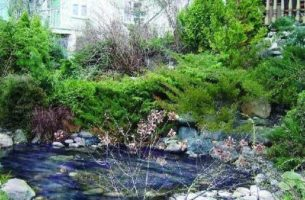 Рукотворный водоем на дачном участке