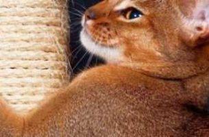 Как сделать когтеточку для кошки своими руками мастер-класс, пошаговая инструкция