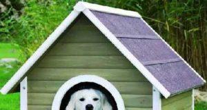 Будка для собаки и важные моменты при ее возведении