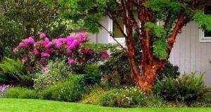 Травяной газон для сада: разновидности и характеристики