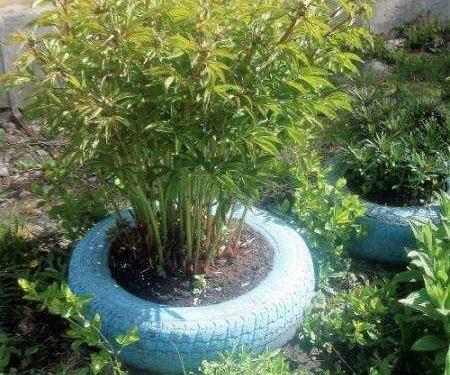 Как украсить двор своими руками