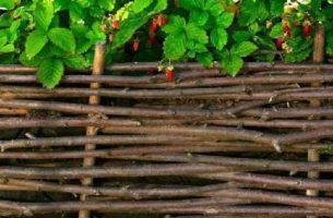 Забор из лозы своими руками