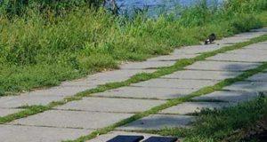 Как обустроить участок. Дорожки из бетона