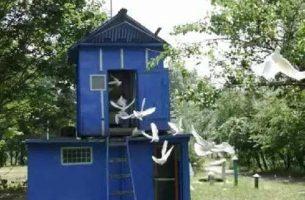Строительство голубятни