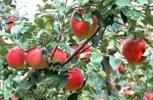 Выбираем фруктовый и цветочный сад для дома