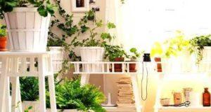 Дизайн интерьера своими руками. Использование комнатных растений в дизайне интерьера