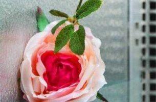Украшение интерьера живыми цветами