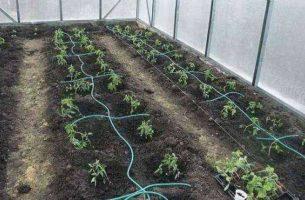 Капельный полив в теплице и на огороде своими руками: комплектующие, схемы, фото, видео