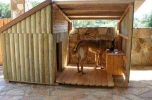 Собачья будка своими руками: фото + видео