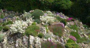 Альпийские горки: виды, устройство, растения