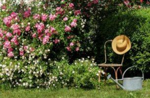 16 секретов красивого сада без затрат