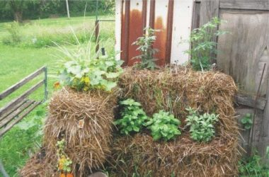 Огород на соломенных блоках—идеальное решение
