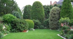Как правильно выбрать газонное покрытие