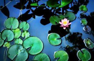Как устроить садовый пруд