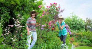 Мечта дачников — сад, который растет «сам по себе»