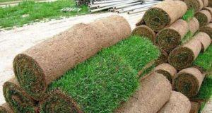 Секреты устройства рулонного газона
