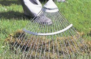 Как избавиться от проплешин на газоне