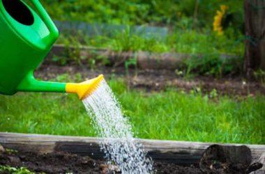 Правильный полив растений на участке