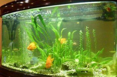 Светодиодные лампы для аквариума как сделать своими руками